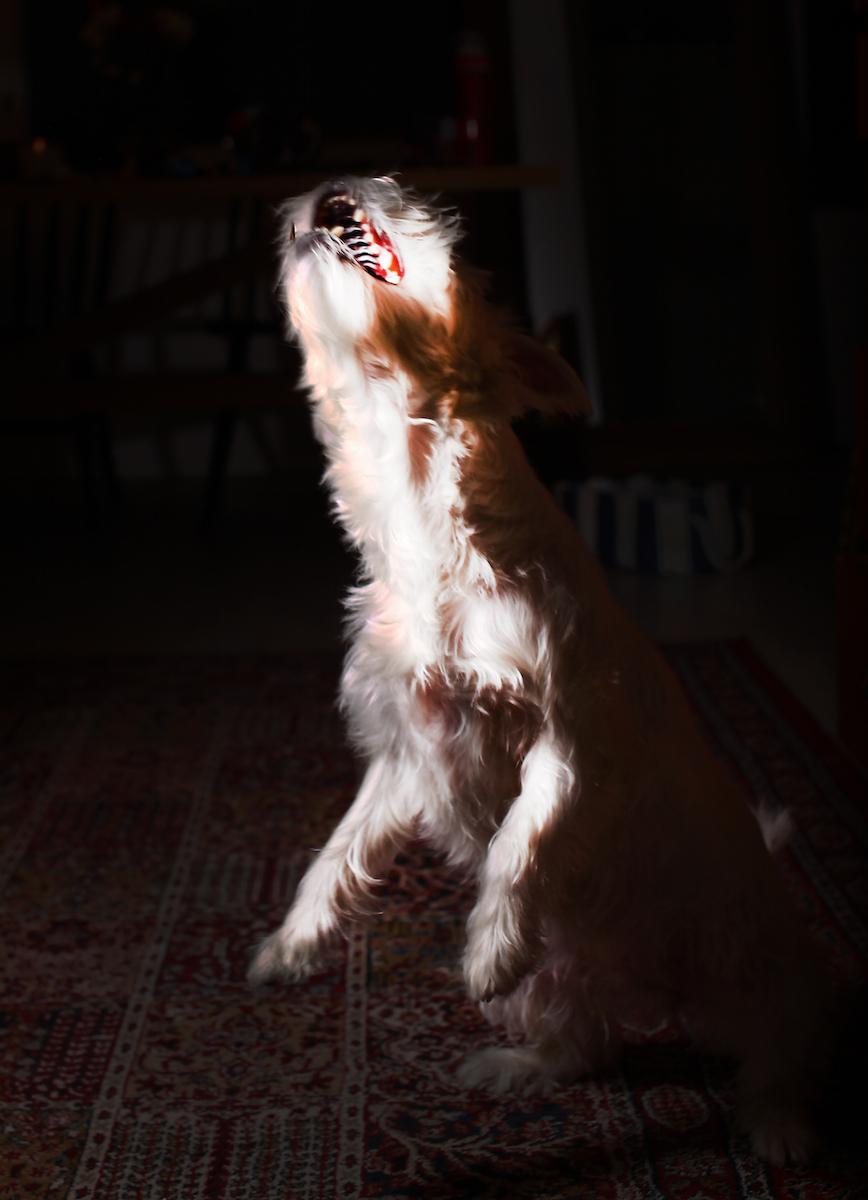 """""""Huutoa, ala-arvoista käyttäytymistä, nimittelyä, selän takana puhumista, uhkailua."""" (HESY:n eläintenhoitaja kuvailee työpaikkakiusaamista Helsingin Uutisten artikkelissa joulukuussa 2015.)"""
