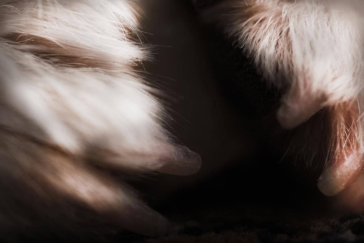 """""""HESYn toiminta on kokonaisuudessaan äärimmäisen häpeällistä. Eräs asiaa läheltä seurannut tuumasi, että se on 'kauhua suoraan tajuntaan'. Vastuuton valtapeli kolahtaa lujiten hädänalaisten eläinten nilkkaan. Samalla kolhiintuu maine. Eläinsuojelun maine. Myös ihmiset voivat huonosti tuossa likaisen pelin tahrimassa työyhteisössä."""" (Ote Fifirock.fi-blogista.)"""